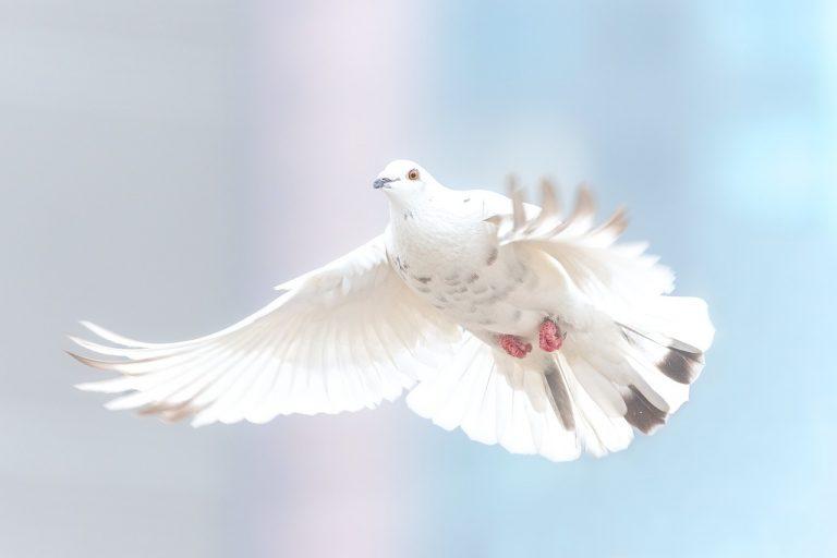 La colomba nel vangelo del battesimo (Marco 1,10)