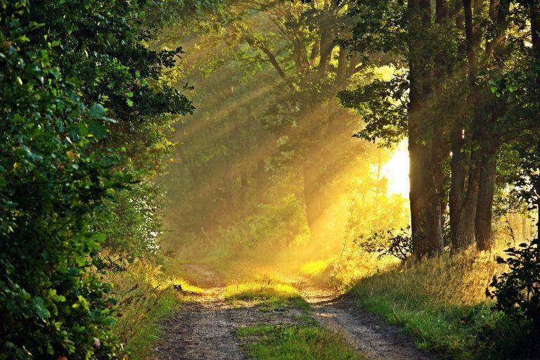 Salmo 3. Preghiera del mattino (seconda parte)