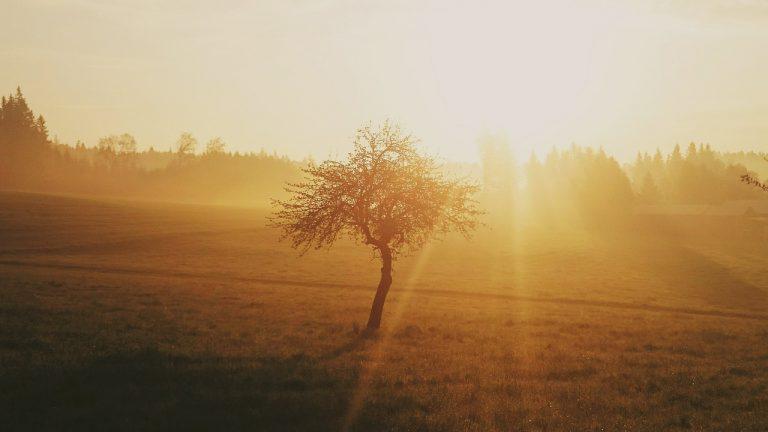 Salmo 3. Preghiera del mattino (quarta parte)