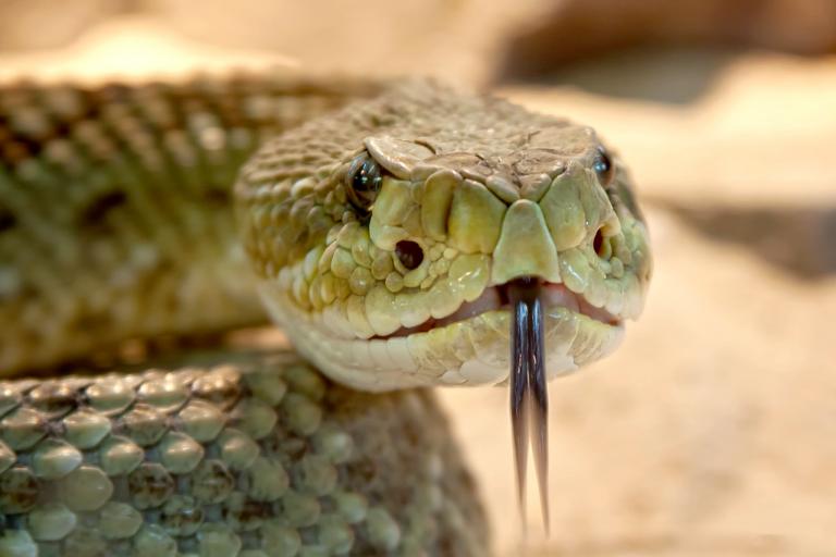 Che cosa rappresenta o chi è il serpente di Genesi 3?