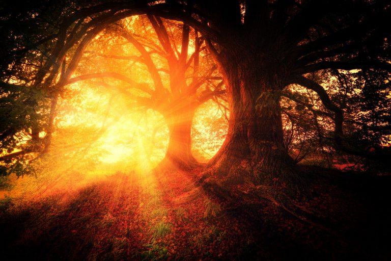 La tua luce sorgerà come l'aurora